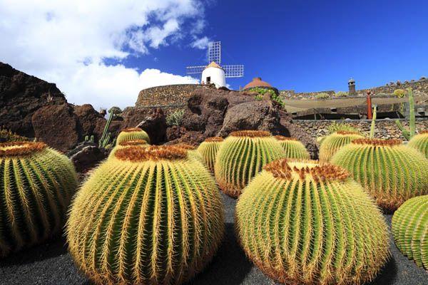 Jardin de Cactus de Lanzarote