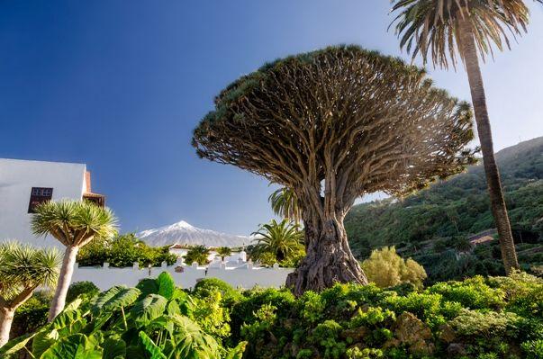 Tenerife el drago y el Teide