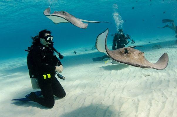 Nadando con mantas rayas en Gran Caimán